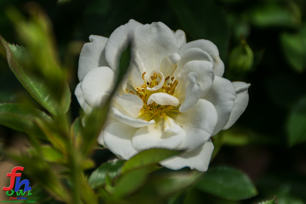 Blume7-2