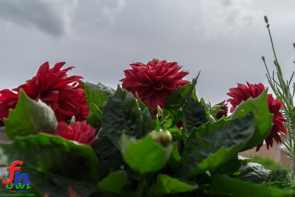 Blume7-5