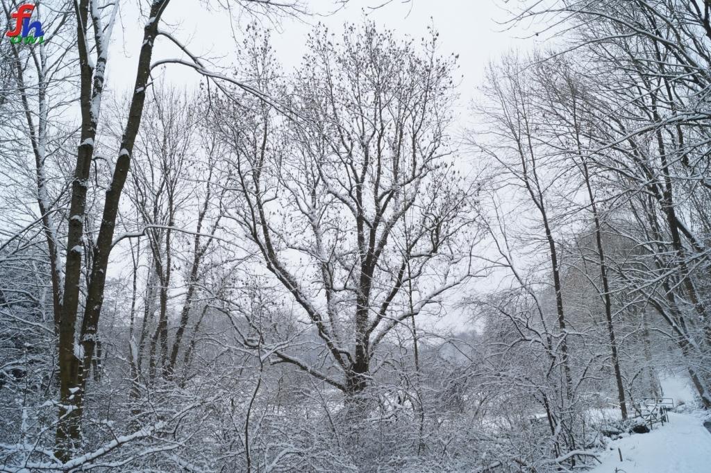 winter00002