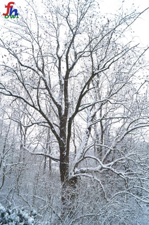winter00003