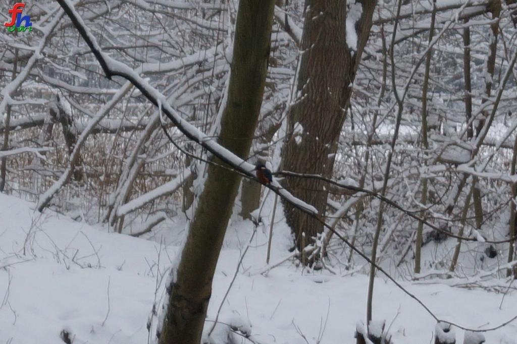 winter00008